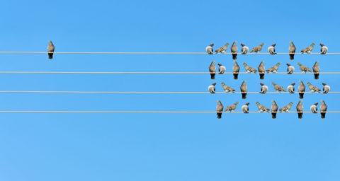 one bird alone on a wire of to the side with several birds on wires on the other side