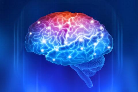 Neuroscience brain image